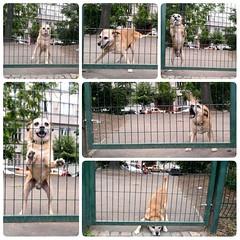 2016-06-26 stenatko (zmetok) Tags: park dog cute praha pes bif fofa 2016