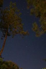 IMG_0430 (Ludo_M) Tags: longexposure sky tree night canon pose stars eos noche nacht wideangle ciel arbres pines nuit notte toiles 6d grandangle poselongue canoneos6d 20mmf14dghsm|art015