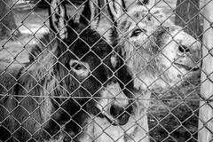 Ouwehands Zoo (Mysecrethistory) Tags: blackandwhite monochrome animals canon zoo animalkingdom rhenen blackandwhitephotography ouwehands zoolife ouwehandsdierenpark ouwehand canonphotography ouwehandszoo