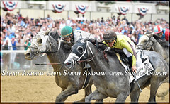 Grey-fecta! Creator, Destin, Lani at the wire in the 2016 Belmont Stakes (Rock and Racehorses) Tags: ny grey belmont creator destin lani belmontstakes tapit r360wire webcreatorska6521sarahandrew