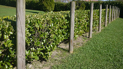 OPC 111115 031 (Jusotil_1943) Tags: opc111115 cesped postes setos verde green hedges hedgerows madera