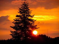 Tanne im Sonnenuntergang (tomac_foto) Tags: sonnenuntergang outdoor himmel wolke wolken dmmerung sonne baum tanne 2016 strahlen