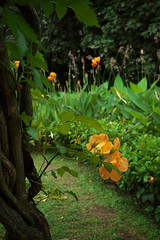 _11 (Taiwan's Riccardo) Tags: ltm color digital taiwan rangefinder botanicalgarden  l39  colorskopar 2016 28mmf35 sonyccd voigtlanderlens epsonrd1x