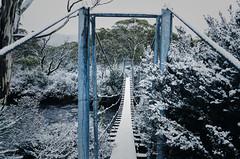 Paul Brandon Overland 2016 (10 of 140) (Paul Brandon  Rambling House Photography) Tags: mountain snow mountains walking nikon rainforest hiking australia tasmania cradle iphone