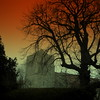 abbey sunset (perseverando) Tags: tree church abbey silhouette square ancient dorchesteronthames perseverando visionqualitygroup magicunicornverybest magicunicornmasterpiece