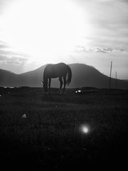 Portrait of a horse with human waste (Daniel Ivn) Tags: sunset bw horse blancoynegro animal mxico trash mexico caballo atardecer blackwhite bottle afternoon highcontrast coke pollution basura puestadesol cocacola waste tarde botella valledebravo contaminacin altocontraste desperdicio