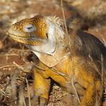 """BIO 245: Ecology of Ecuador<a href=""""http://farm8.static.flickr.com/7101/6996074764_9ff8551873_o.jpg"""" title=""""High res"""">∝</a>"""