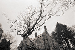 Bare tree overlooking a house, England (Marco Venturini Autieri) Tags: greatbritain winter england blackandwhite house tree english nature horizontal architecture outdoors photography countryside europe gloomy view unitedkingdom menacing townhouse bare perspective nobody frombelow shade daytime tall grainy overlook overlooking sullen baretree diminishing filmgrain tranquilscene highspeedfilm dimlight wideanglelens overhanging unusualangle halflight lugubre northeastengland diminishingperspective buildingexterior nonurbanscene lowangleview grainyfilm penombra alberospoglio typicallyenglish stronggrain traditionallyenglish locationsandtravel