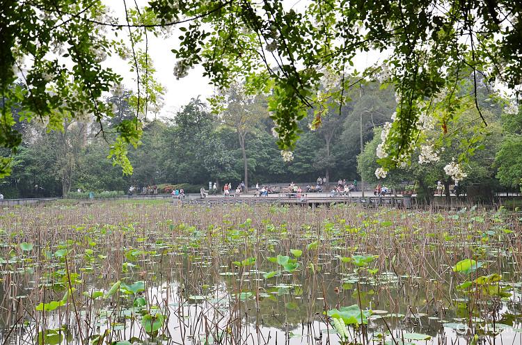 植物園野薔薇07.jpg