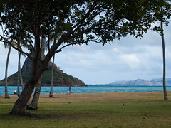 Through the Trees (Peter E. Lee) Tags: trees winter beach grass landscape island hawaii unitedstates oahu peaceful kaneohe pacificocean frame hi eastern windward 2012 chinamanshat mokolii kualoaregionalpark