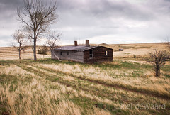 little house on the prairie (Joel deWaard) Tags: columbus montana homestead easternmontana homesteading drylandfarming rapelje