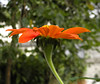 Natural (Ricardo Venerando) Tags: flowers orange flores flower color macro green nature brasil garden natureza olympus explore abc discovery soe naturesfinest conservacion nationalgeografic platinumphoto abcpaulista diamondclassphotographer ysplix grandeabc goldstaraward fotocultura ricardovenerando