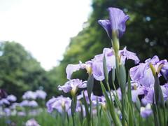 無題 (Simon*N) Tags: flower japan lumix olympus 日本 風景 omd 日常 m43 em5