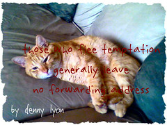 Cat Philosopher: Curty On Temptation (denny.lyon) Tags: cats animals photography graphics funny arts philosophy quotes temptation funnycats lifequotes