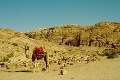 Camel in Petra (tttske_C) Tags: petra jordan camel ラクダ ヨルダン ペトラ遺跡