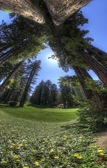 Redwindow (@!ex) Tags: california sun tree golf redwood hdr hdri northwoods vertorama ef14mmf28liiusm canon5dmkiii
