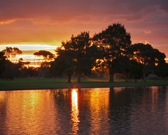 Sunset trees (Dale Gillard) Tags: sunset orange cloud tree melbourne victoria cherrylake
