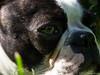 Herrchen im Auge 25.05.2012