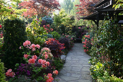 Spring azalea flowers along the pagoda pathway (Four Seasons Garden) Tags: fourseasonsgarden