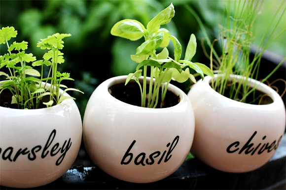 I want to grow herbs in my future garden