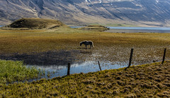 Pure nature of Iceland in the north (I.Mjll) Tags: kirkja hestar vatnsdalur hnavatnsssla hvammstangi lftir folld undirfellskirkja mlairsteinar gistiheimilihnnusiggu kattarauga