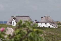 Sylt11 (kairemwatt) Tags: sylt kampen reet reetdach strohdach nordfriesland reetdcher reethuser