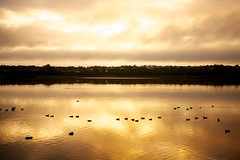 Lake Joondalup - June 2012 - No.3 (Bryan Garnett-Law) Tags: morning lake ducks perth westernaustralia joondalup lakejoondalup neilhawkinspark