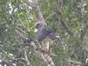 canopywalkway-leonmoore-025