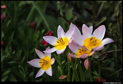 Flower - ID?