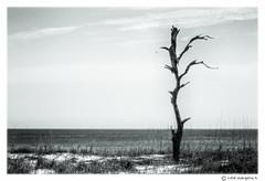 Tree @ Dauphin Island (evangelos K) Tags: sea tree beach water sand unitedstates alabama weathered a77 dauphinisland akabama 70400g