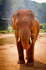 IMG_7658 (yakovina) Tags: thailand