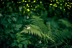 / Firefly () Tags: 50mm nikon f14 nikkor firefly ais d800