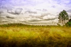 landscape Veluwe (dannygeveling1) Tags: tree landscape veluwe lightroom