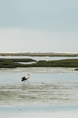 Ria Formosa, PT (Aleksandra S.K.) Tags: portugal water faro stork riaformosa