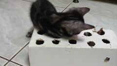 2012-08-08 19.29.42-5 (hui5300) Tags: 2012