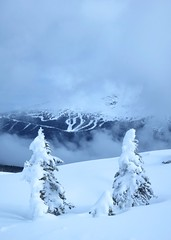 Seventh Heaven from the base of Flute Ridge (Ruth and Dave) Tags: mountain tree weather clouds whistler cloudy framed powder skiresort powderday whistlerblackcomb seventhheaven snowghost weatherphotography symphonyamphitheatre rhapsodybowl