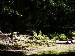 P1030305 (jackirelanddfc) Tags: scotland angus iff