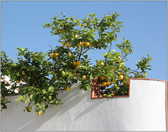 Blue Sky & Lemons (Mabacam) Tags: sky white wall walking spain village hiking andalucia lemons moorish 2016 canillasdealbaida