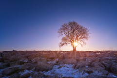 Aurora (_skynet) Tags: park morning blue light england sky orange sun white snow lightpainting cold tree nature rock sunrise lens landscape dawn nationalpark rocks bright magenta illumination freezing lensflare flare limestone lone malham yorkshiredales