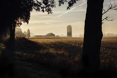 When October Winds Take Hold (davelawrence8) Tags: 2015 albion fall goldenhour michigan rural sunrise vsco mi usa autumn fog mist road scenic landscape