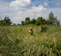 My Smiling Bunny ;-) (neerod81) Tags: dog bunny grass smiling fun fast sunny running hund rocco spaziergang spas