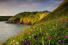 As the Sunset Came to Meet the Evening on the Hill... (Peter Quinn1) Tags: sunset wales wildflowers gowerpeninsula southgate threecliffsbay shanemacgowan yellowrattle bloodycranesbill thebodyofanamerican
