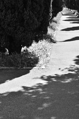 Perspective with shadows (Matthewpath) Tags: light summer portrait people blackandwhite black photography lol thing colores minimal metaphysics metaphysic yphoto lightphotography summer2016 nikonnikonphotography nikond7100 summer2k16 summertbtminem