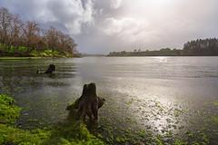 Winters River (lytescape) Tags: winter water river landscape outdoor hamilton waikato riverbank