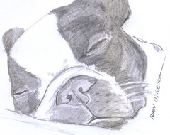 perro a lpiz (ivanutrera) Tags: animal sketch drawing sketching canino draw dibujo lpiz dibujoalpiz