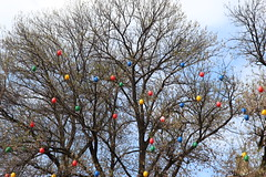 Easter Tree XXL (Been Around) Tags: tree easter europa europe eu bulgaria eggs uni universitt baum 2012 eier eastertree bul bulgarien velikoturnovo  osterbaum  welikotarnowo velikotarnowo eastertreexxl nezavisimostblvd velikotarnovouniversity ulitsavasillevski