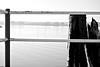 Lake's fence (RVinside) Tags: autumn bw italy landscape lago blackwhite aperture nikon italia natura bn dettagli acqua effect autunno bianconero umbria particolare lagotrasimeno momenti dettaglio d60 55200 55200mm nikond60 blackwhitephotos flickraward fotografinewitaliangeneration nikonclubit