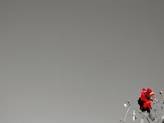 peace offering (DeeAshley) Tags: favorite usa art digital canon buzz photography photo yahoo dallas blog google interesting flickr foto arte unitedstates tag abril creative picasa blogs april dfw interesante iphone fotografa eeuu 2011 tumblr iphoneography canong11 iphoneographie gogoloopie deeashley dionneashley dionnehartnett shehadpotential