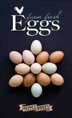 Egg Poster (Indiana.Matt) Tags: brown chicken farm egg trafalgar indiana orchard eggs fresheggs blueeggs appleworks farmfresh whiteeggs chickeneggs theappleworksorchard