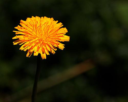 Grow a little Sunshine